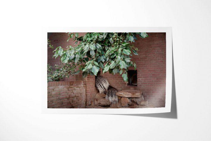 Artis-Zoo-Amsterdam-Bas-Uterwijk-05b
