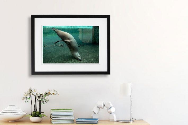 Artis-Zoo-Amsterdam-Bas-Uterwijk-03kg