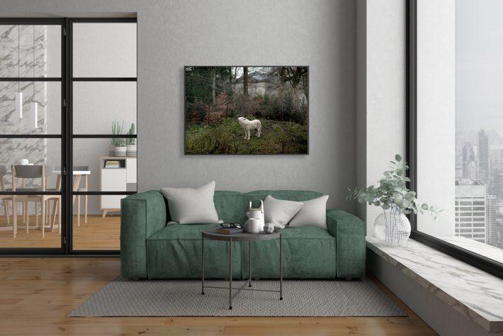 Artis-Zoo-Amsterdam-Bas-Uterwijk-wolf-2