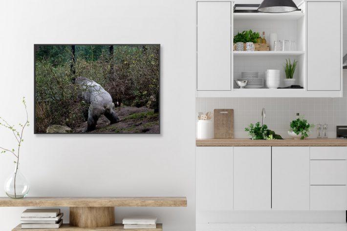 Artis Zoo Bas Uterwijk Capture Amsterdam Gorilla (4)
